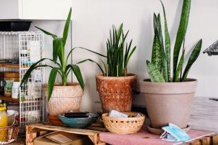Αυτά είναι τα 5 πιο δημοφιλή φυτά στο Instagram και θα σε εμπνεύσουν διακοσμητικά