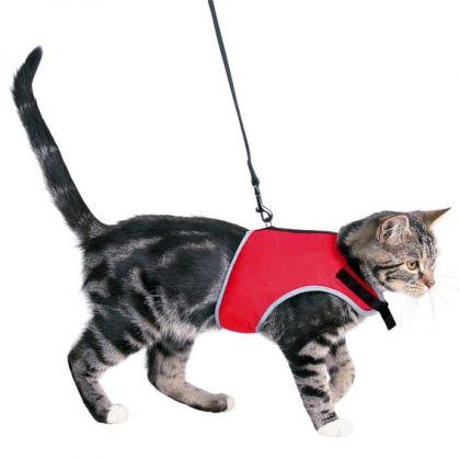 Trixie Σαμαράκι & Οδηγός Γάτας