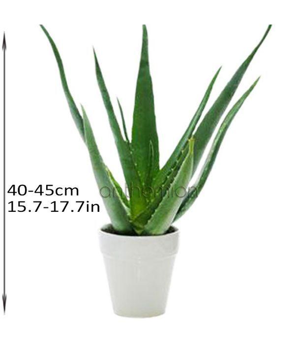 order-plants-online_2_af217_3005701.jpg