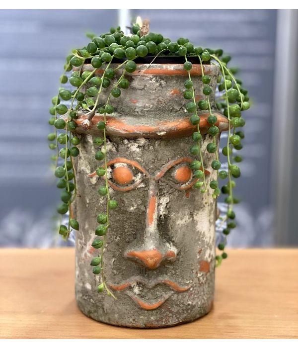 pachyfyto-keramiko.jpg