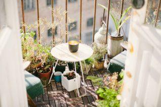 Τα 6 φυτά που διώχνουν τα έντομα (για να κάθεσαι σαν άνθρωπος στο μπαλκόνι)